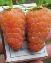 оранжевое чюдо